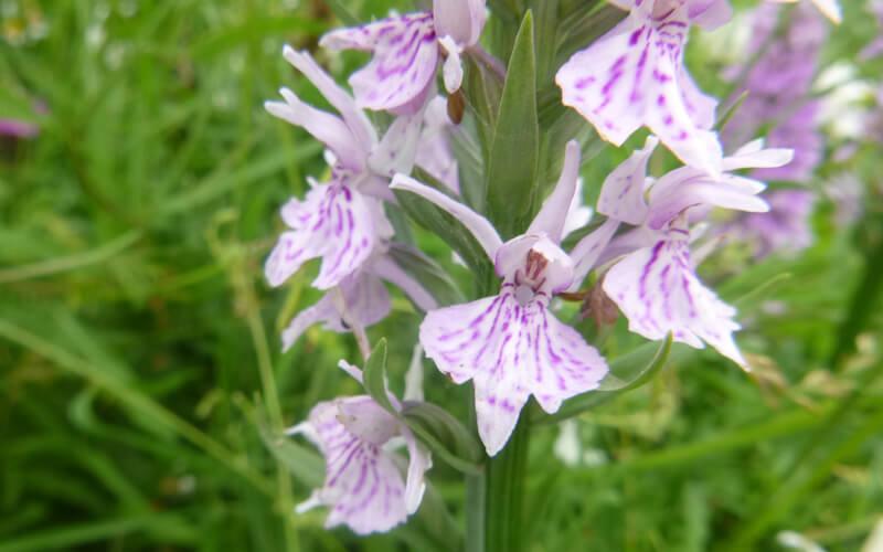 A55 Orchids Case study